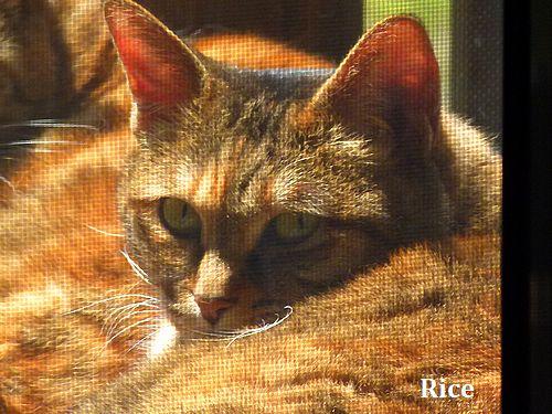 rice3_20120410000459.jpg