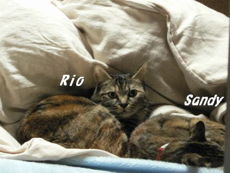 sandy&rio1