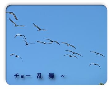 FC2_May8_11.jpg