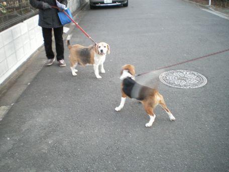 お兄ちゃんと散歩するのだ~。