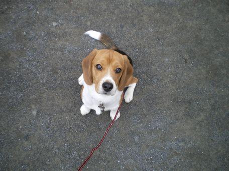 また、お散歩、来ようね!