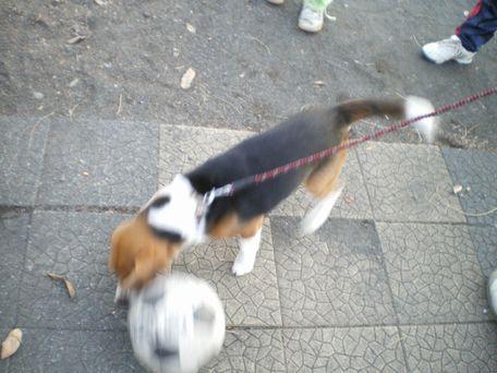 ぼく、サッカー上手い?