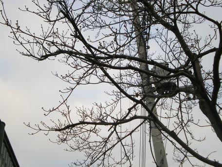 春を待つ、花水木。