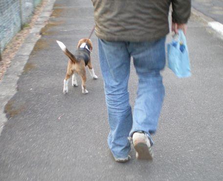 お散歩、嬉しいな~♪