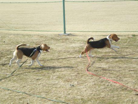 走るふたり。