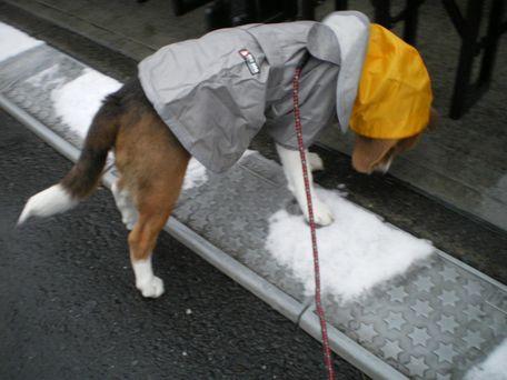 雪を、踏みしめてみる・・・。