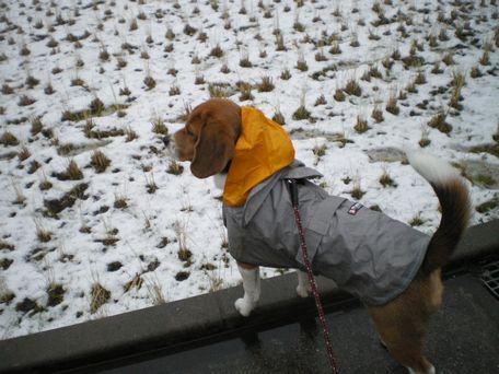 たんぼも、雪景色。