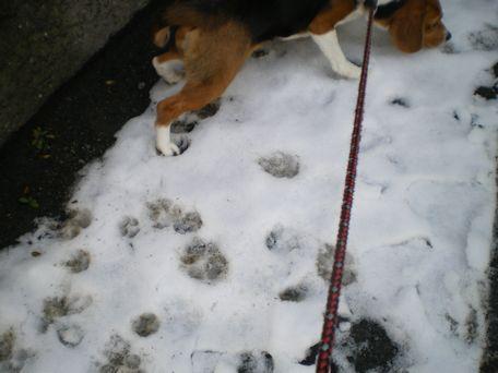 雪、めっけ!