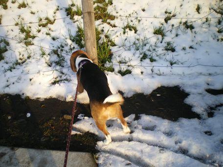 雪、もっと食べた~い!