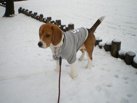えへ。雪、ひとりじめ!