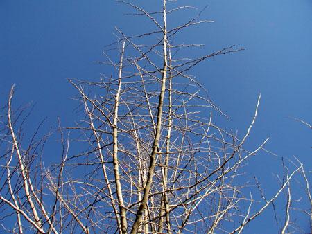 2011121103.jpg