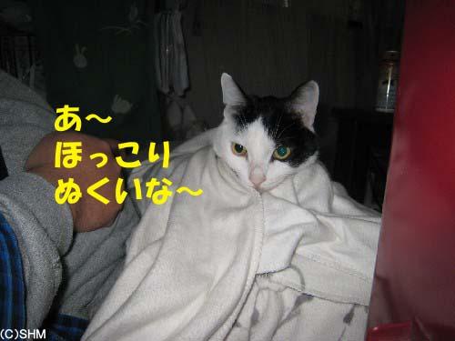 ねこ巾着?