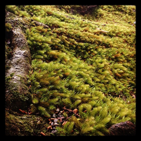 樹木の絨毯