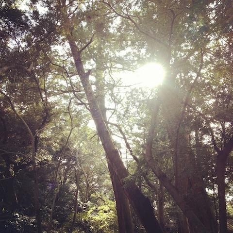 多賀宮前の木漏れ日