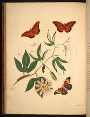 The natural history of the rarer lepidopterous insects of Georgia