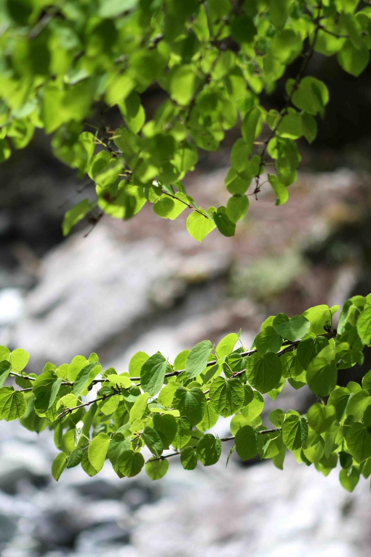 萌える緑と大自然の洗礼②