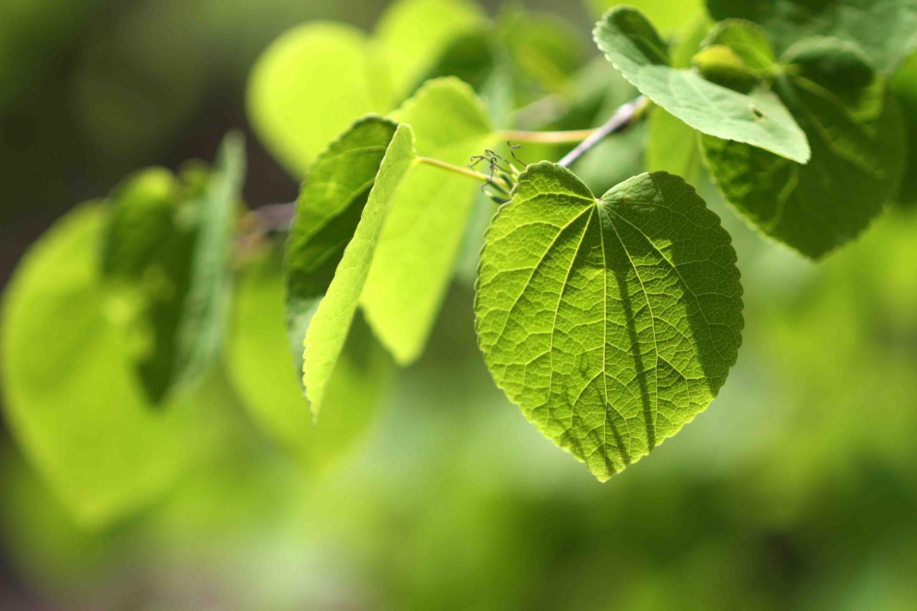 萌える緑と大自然の洗礼(5)-①