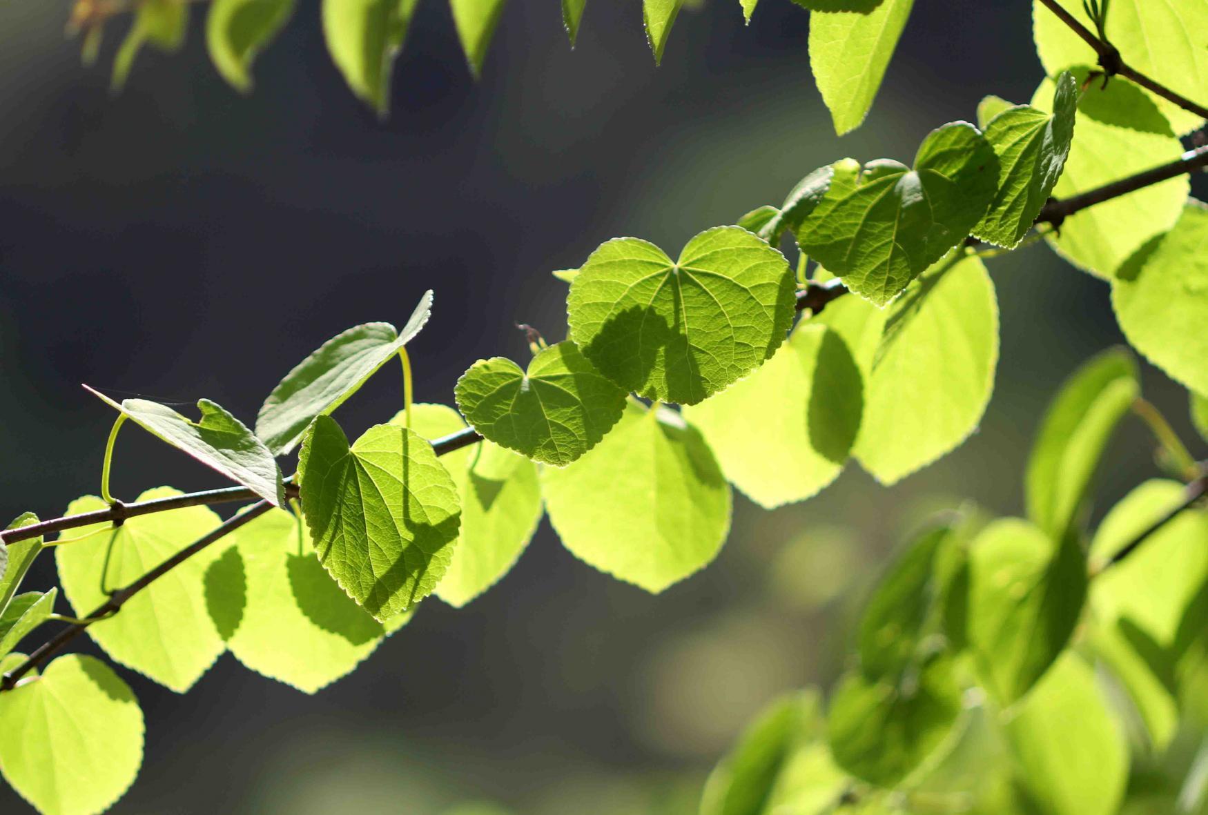 萌える緑と大自然の洗礼(5)-②