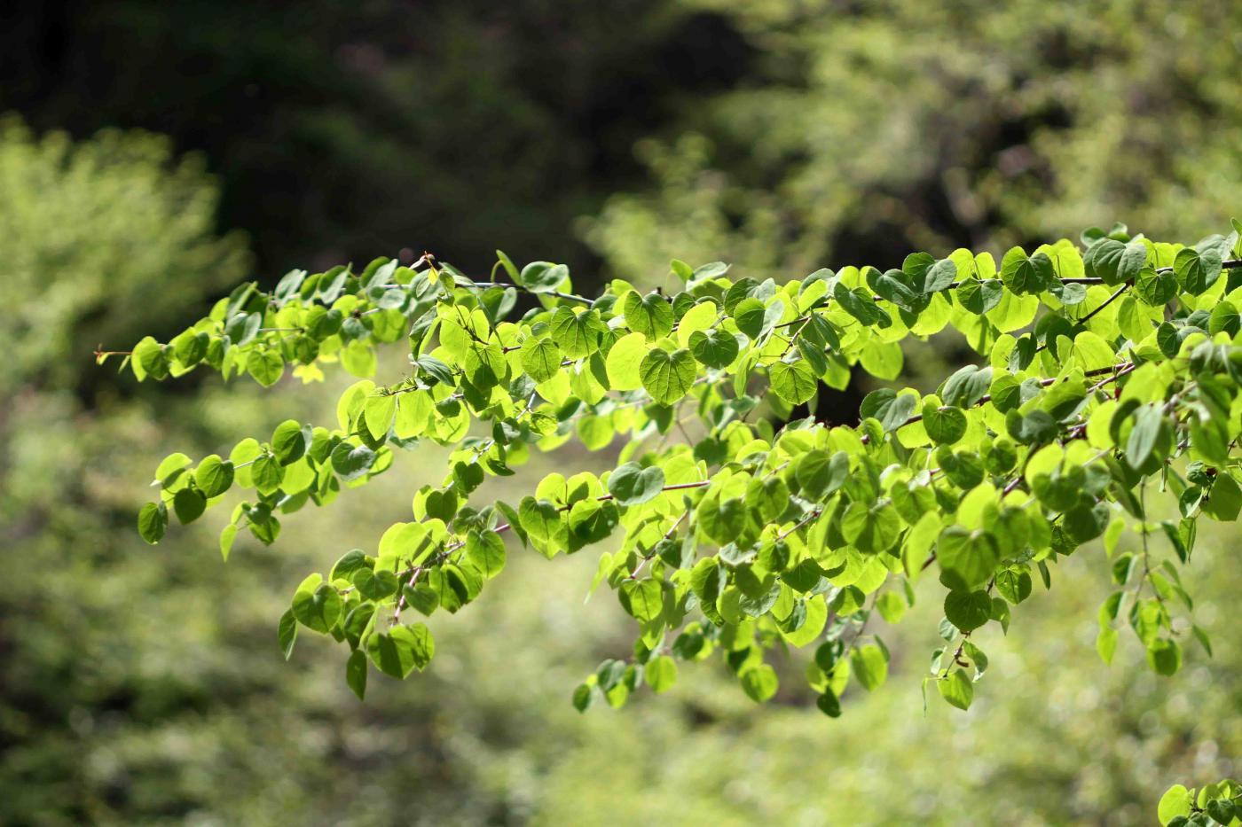 萌える緑と大自然の洗礼(5)-③