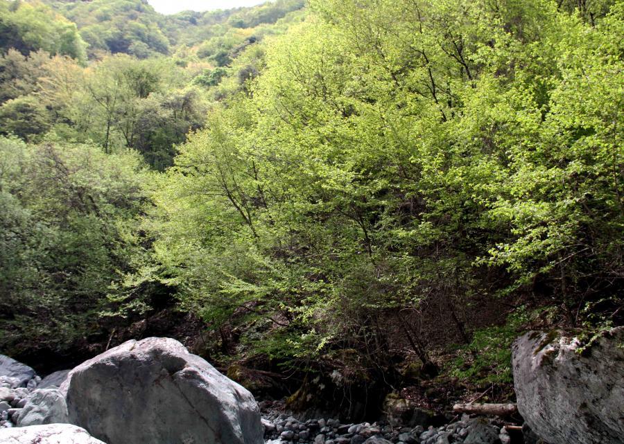 萌える緑と大自然の洗礼(5)-④