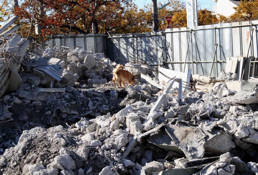 12月4日 瓦礫捜索訓練 GRMとMDS(3)