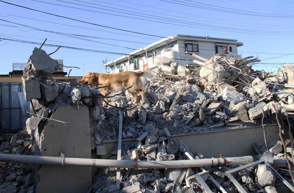 12月4日 瓦礫捜索訓練 ヒット(31)