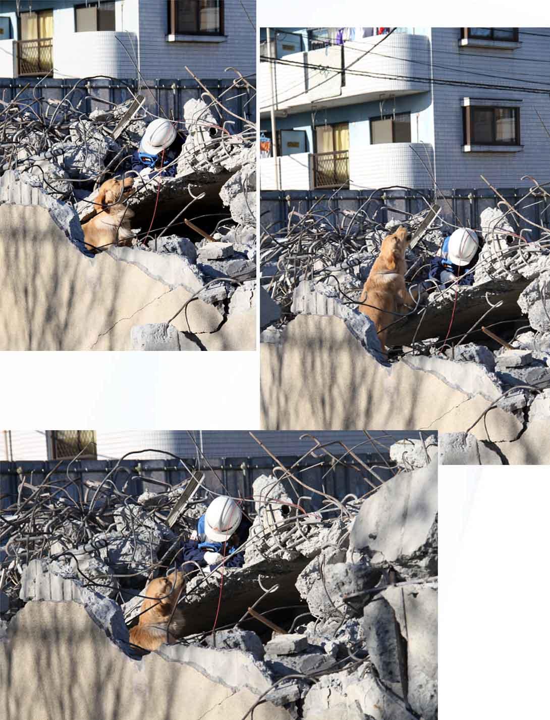 12月4日 瓦礫捜索訓練 ヒット(33)