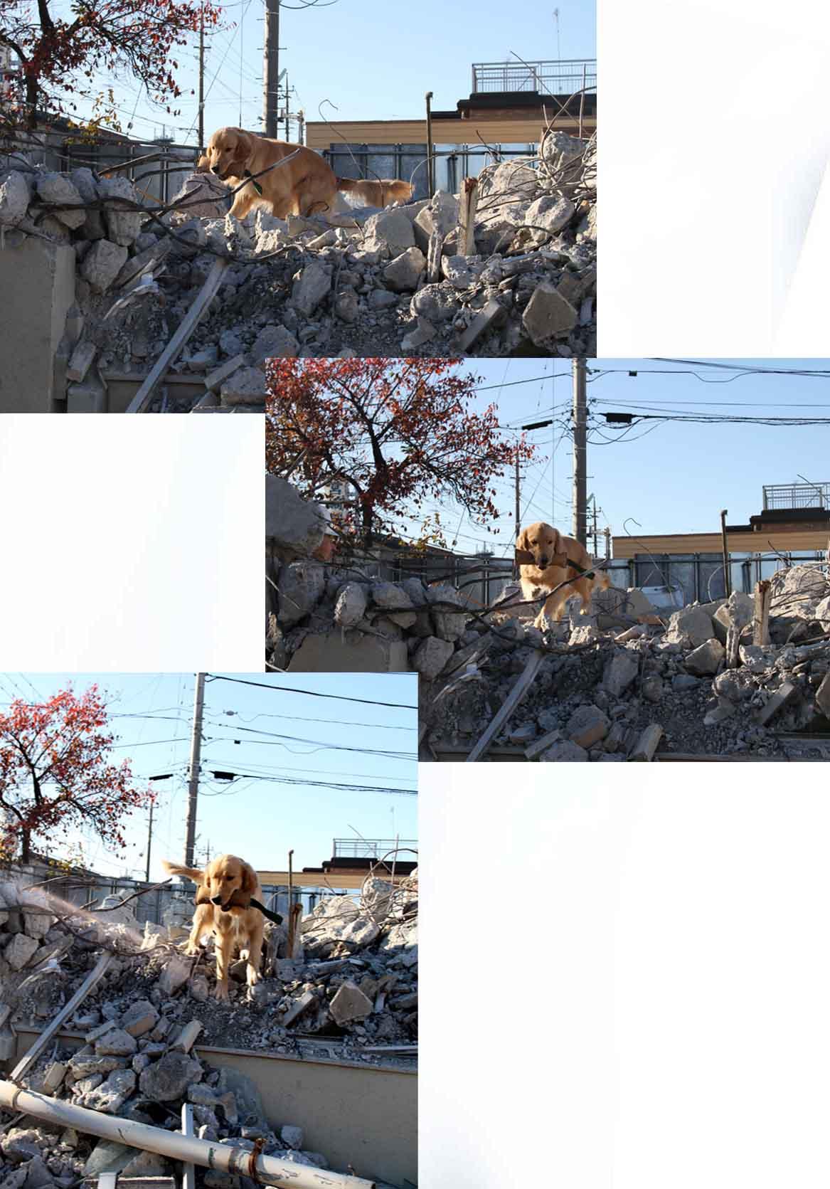 12月4日 瓦礫捜索訓練 ヒット(34)
