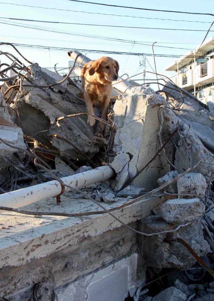瓦礫の上でM(2)