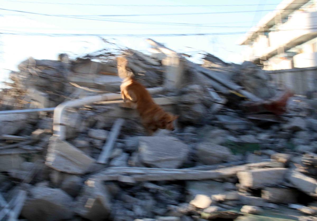 瓦礫の上でM(3)