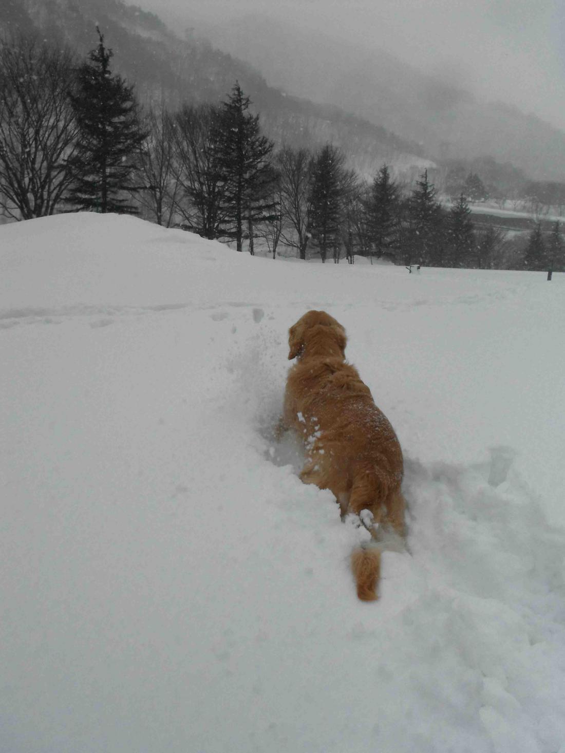 雪中訓練(45)