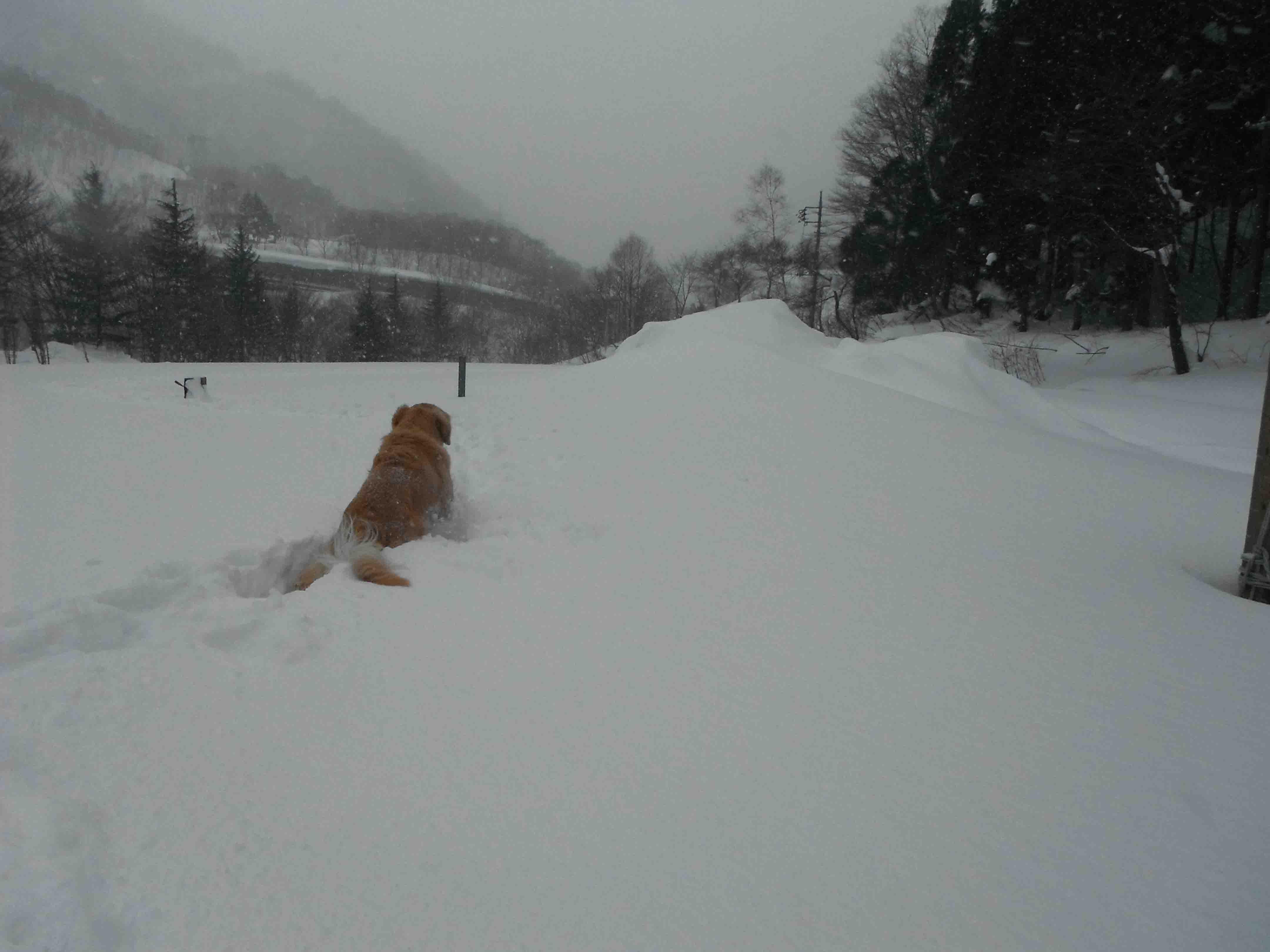 雪中訓練(46)