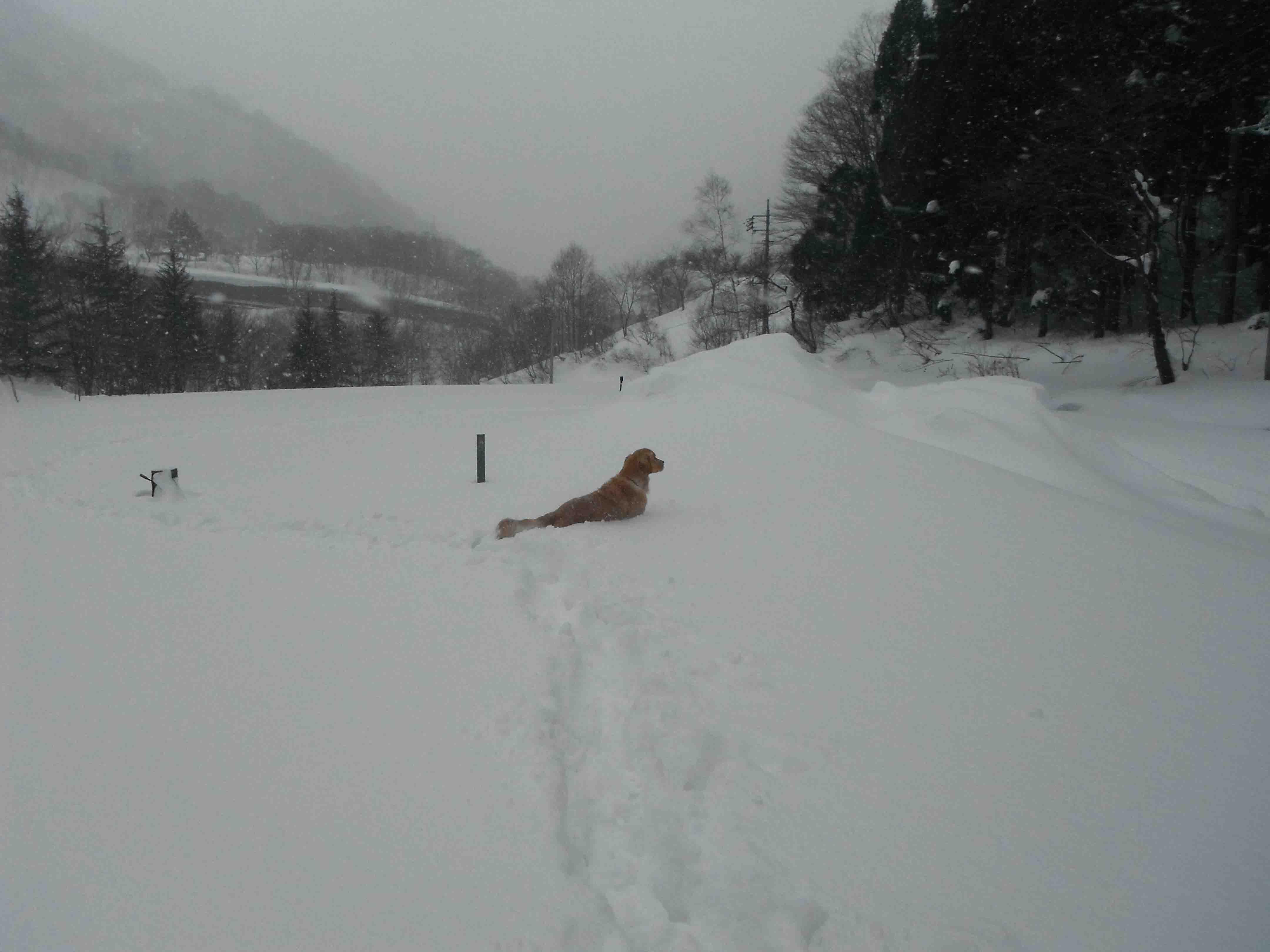雪中訓練(47)