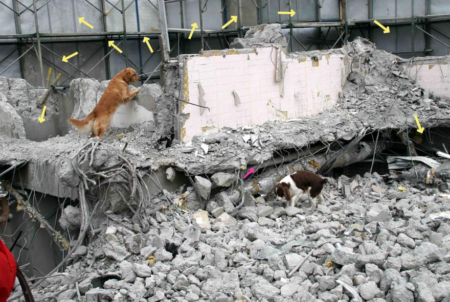 1月15日瓦礫訓練(7)