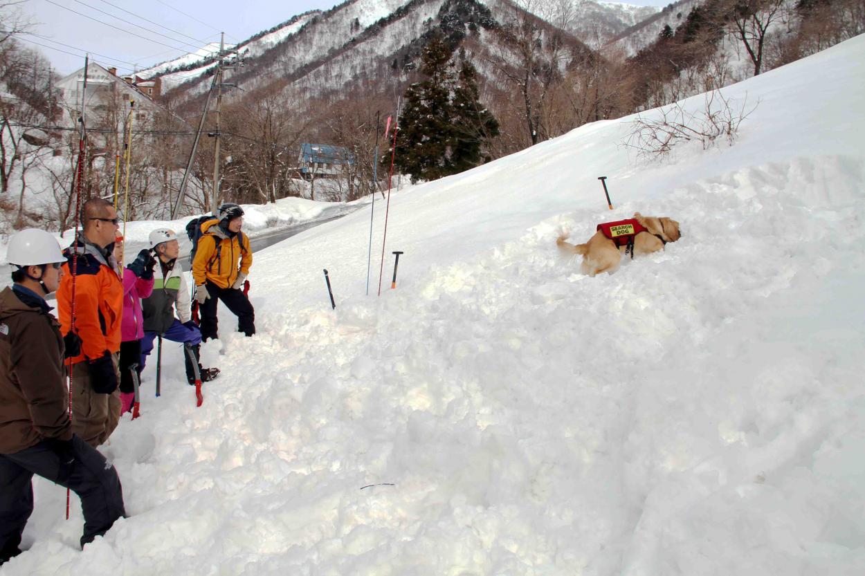 関東雪崩講習会(2)