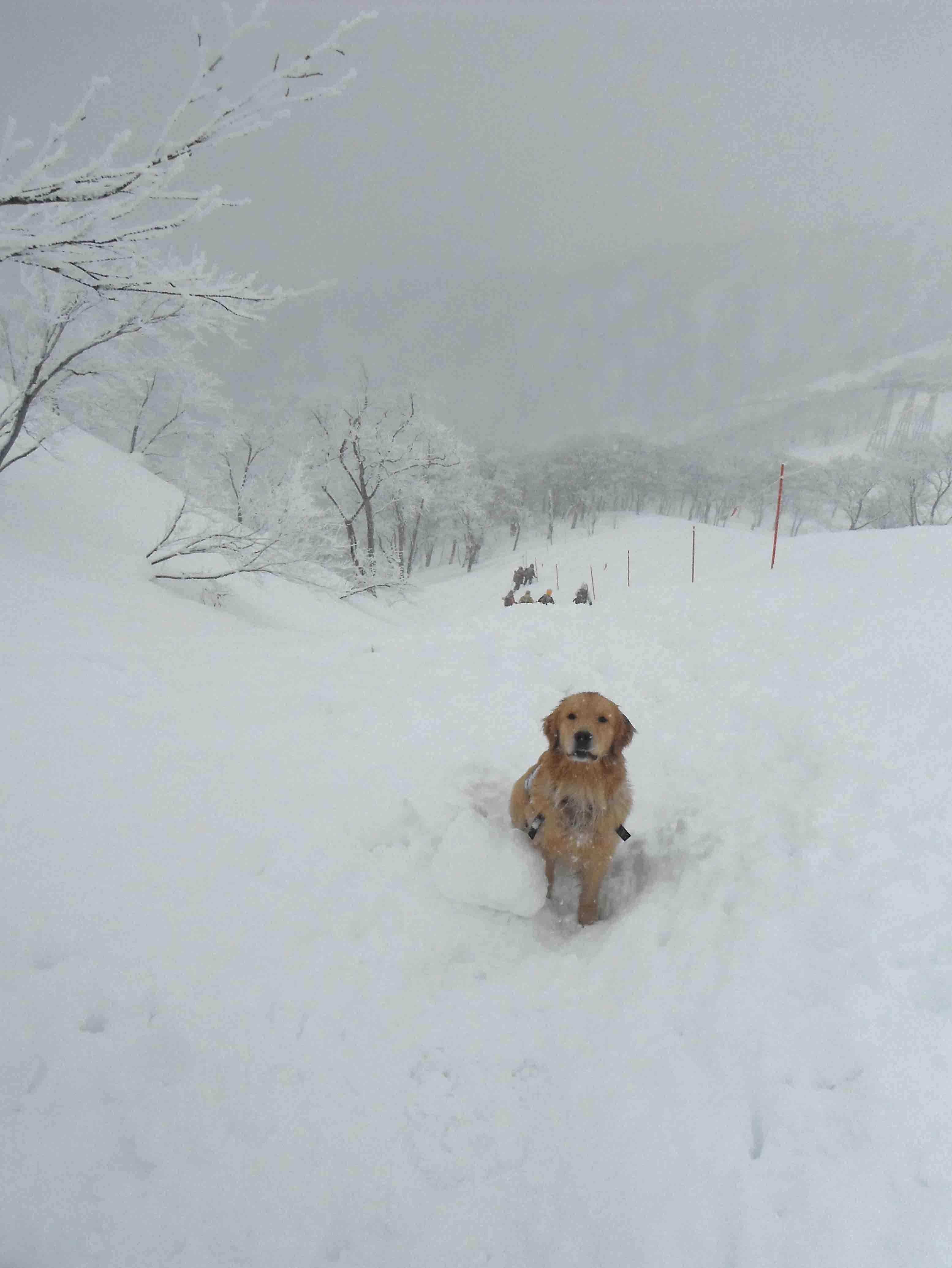 関東雪崩講習会(18)
