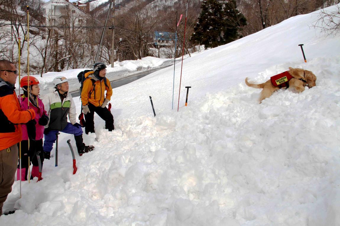 関東雪崩講習会(31)