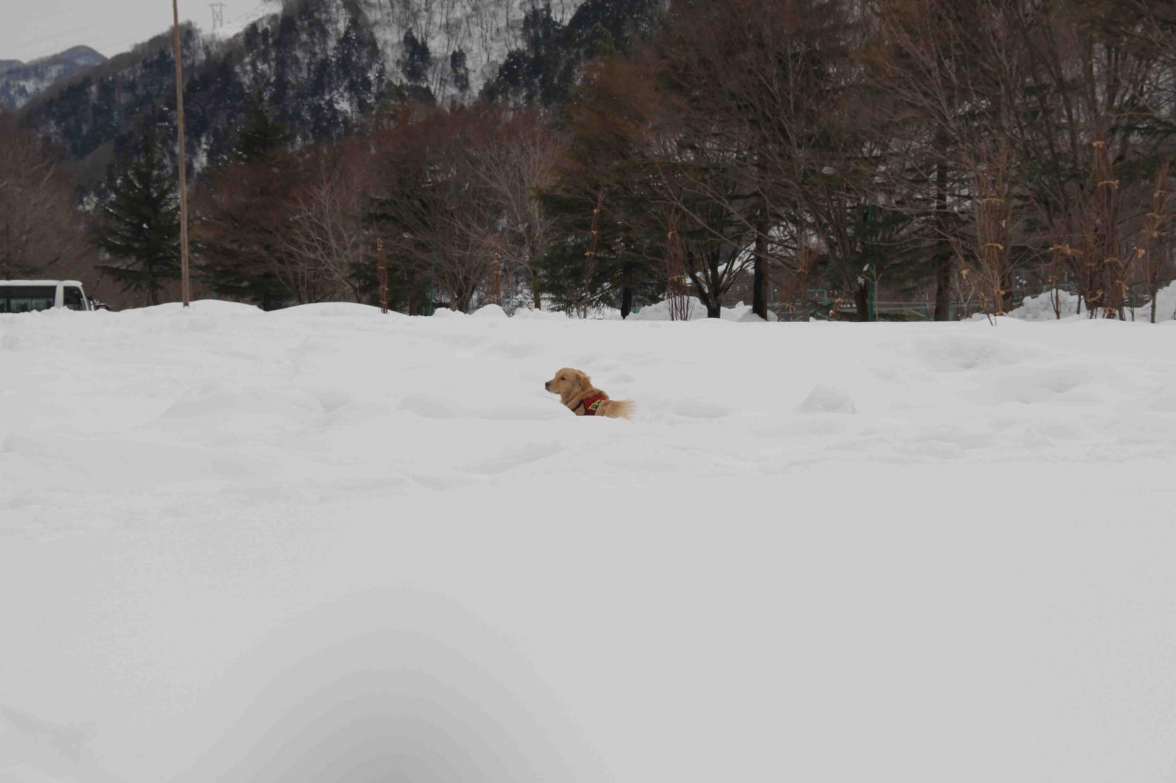 関東雪崩講習会(49)