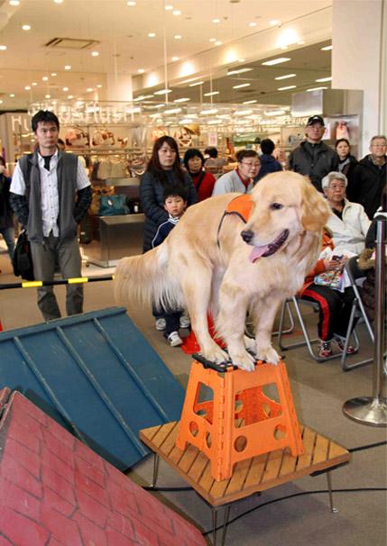 救助犬デモ 3.11 (3)