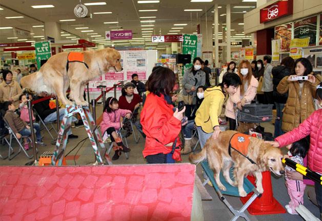 救助犬デモ 3.11 (4)
