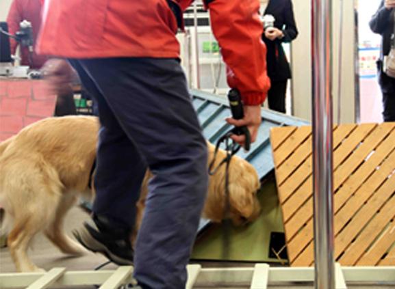 救助犬デモ 3.11 (8)