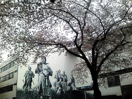 七人の侍と桜
