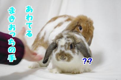 おまけ_convert_20111206194312