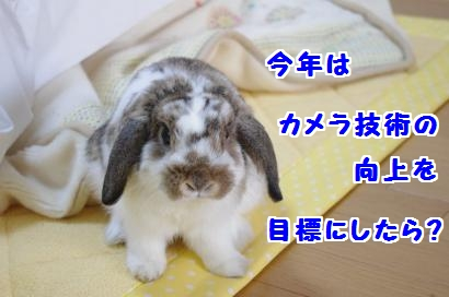 IMGP3674_convert_20120103084223.jpg