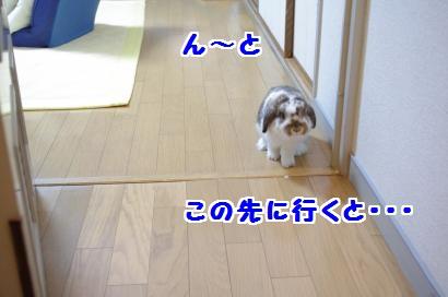 IMGP3686_convert_20120105194427.jpg