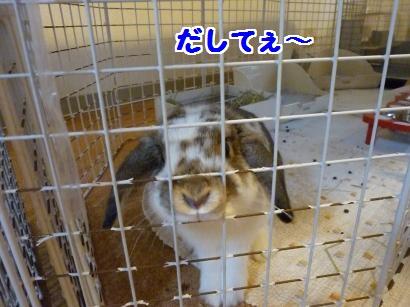 P1090821_convert_20111210125627.jpg