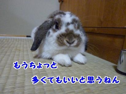 P1100038_convert_20120111112141.jpg