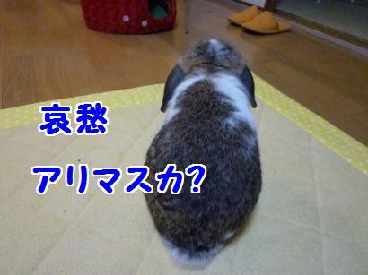P1100069_convert_20120114191055.jpg