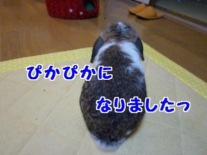 P1100069_convert_20120204193012.jpg