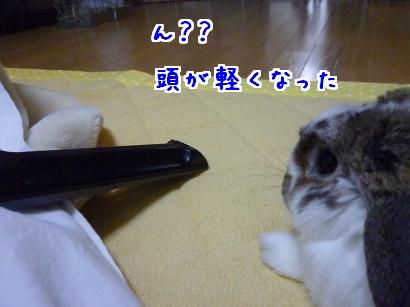 P1100117_convert_20120118063319.jpg